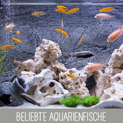 Beliebte Aquarienfische