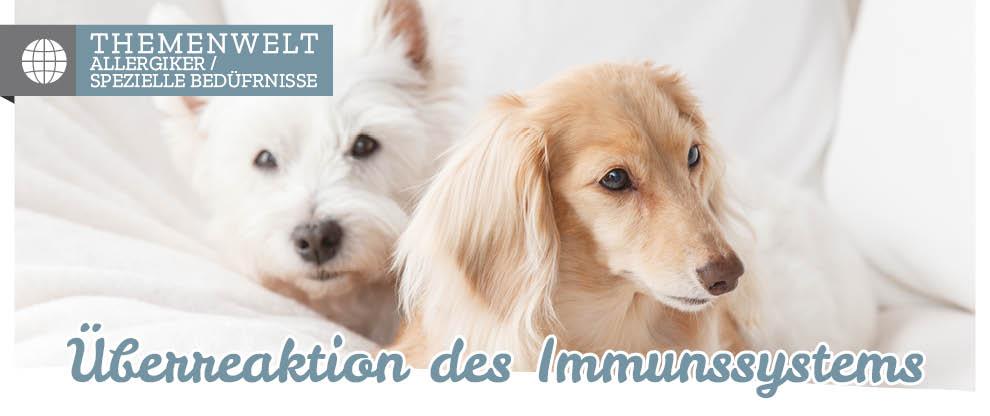 Hundefutter-Allergie beim Hund erkennen und behandeln