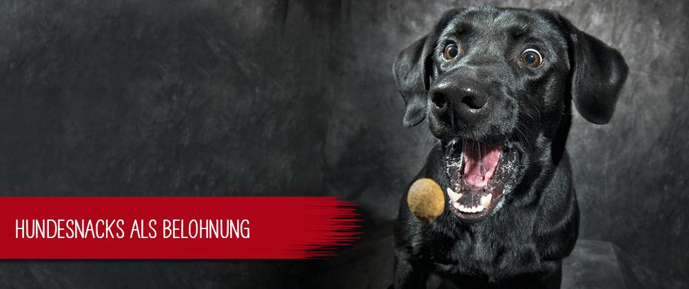 Hundesnacks als Belohnung