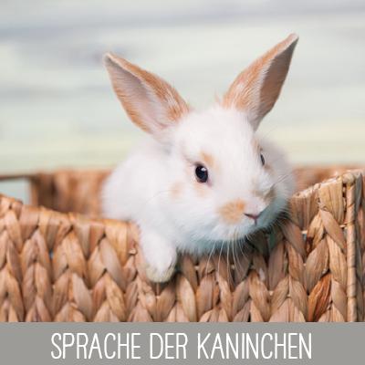 Sprache der Kaninchen