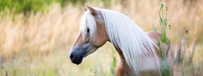 Versicherungen für Pferde