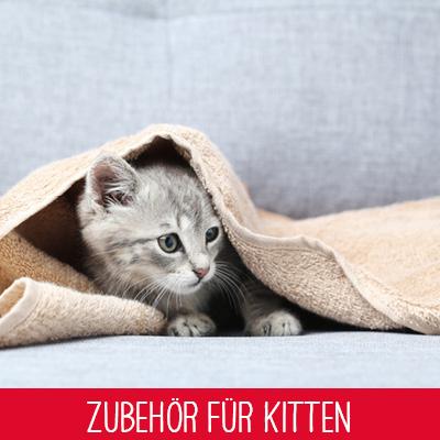 Zubehör für Kitten
