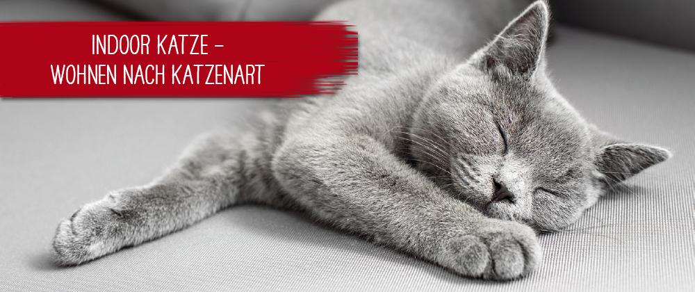 Indoor Katze - Wohnen nach Katzenart