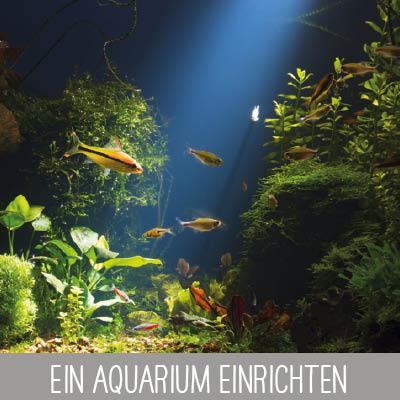 Das Aquarium richtig einrichten