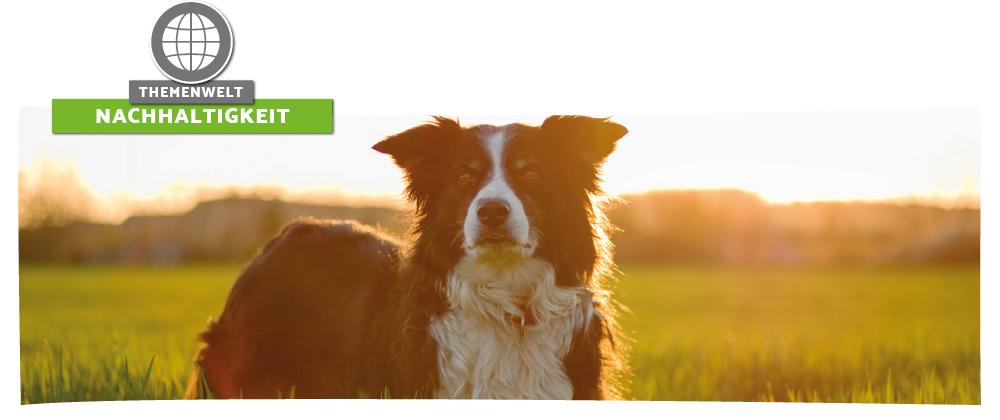 Nachhaltiges und natürliches Hunde- und Katzenfutter