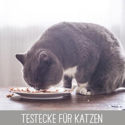 Testecke mit Proben für Katzen