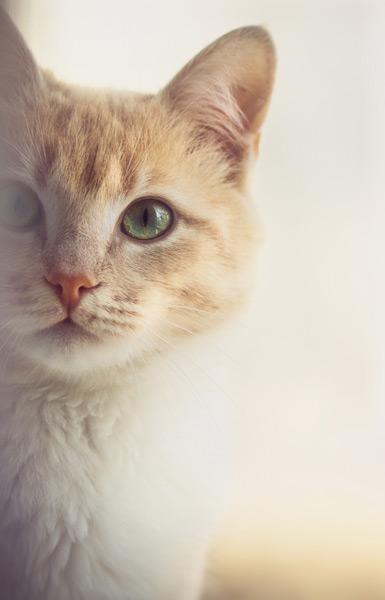 Spezielle Bedürfnisse im zookauf-Themenkatalog Katze