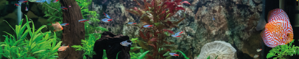 Aquarium und Fische