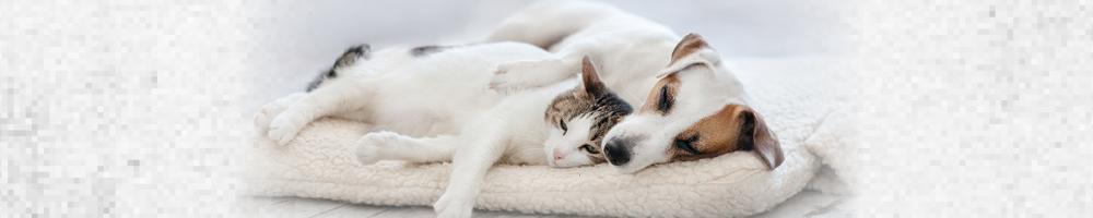 Barfen bei Hund und Katze