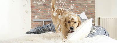 Haustierversicherungen