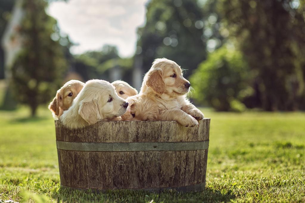 Lebensphasen im zookauf-Themenkatalog Hund