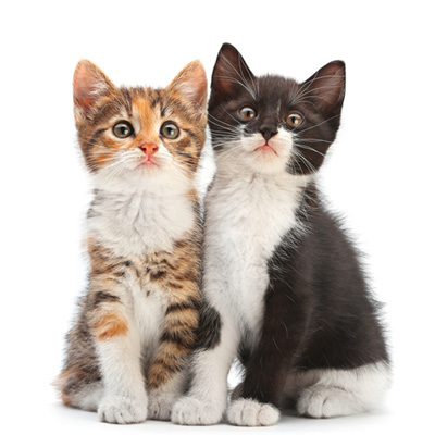 Katzen Spielzeug