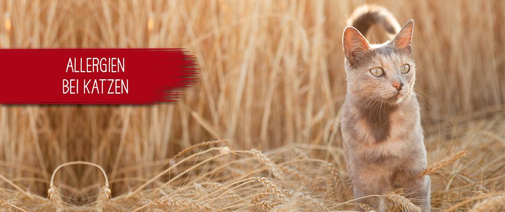 Allergien bei Katzen