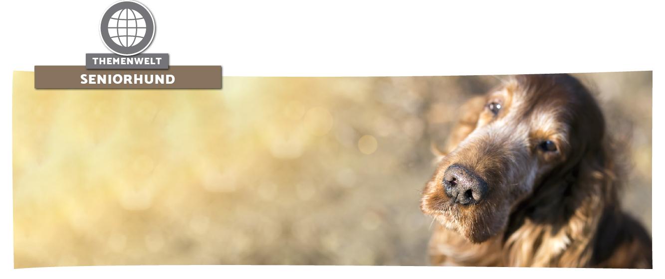 Der alte Hund - Tipps für den Alltag