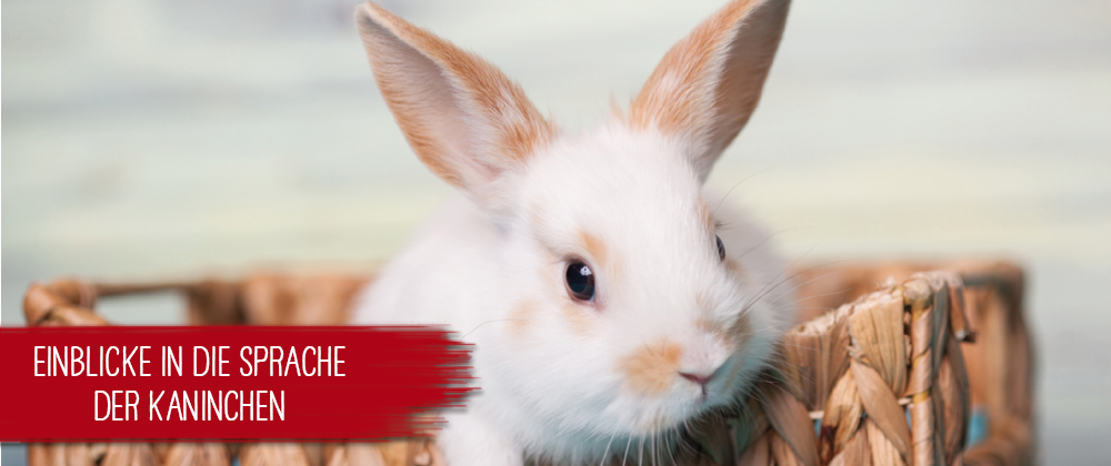 Sprache Kaninchen