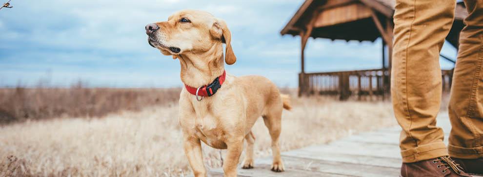 Outdoor Hundeausrüstung für unterwegs