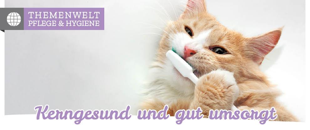 Katzenpflege & Hygiene - Fellpflege des Stubentigers