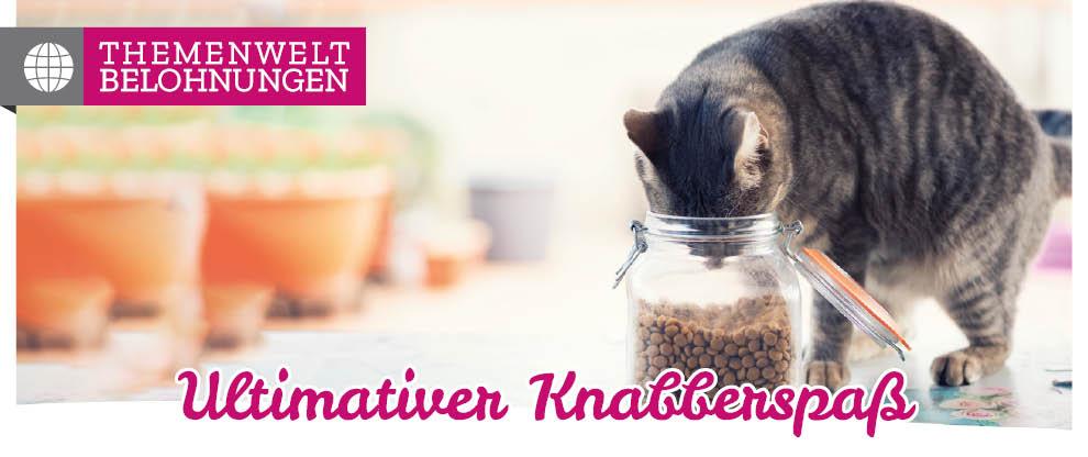 Katzensnacks zur Belohnung: Positive Verstärkung in der Katzenerziehung