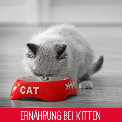 Ernährung von Kitten