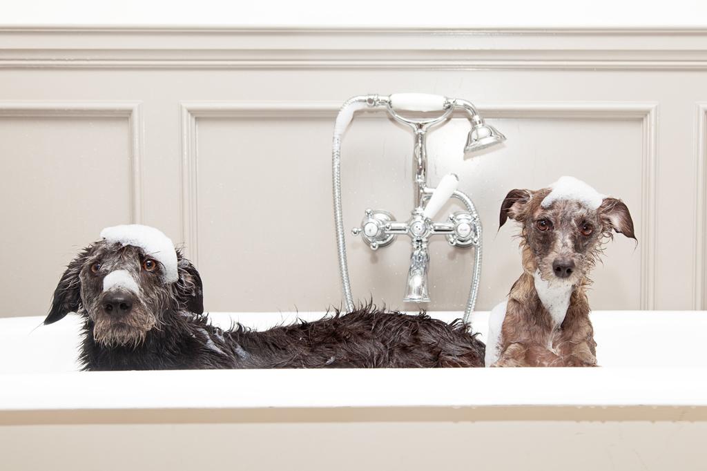 Pflege im zookauf-Themenkatalog Hund