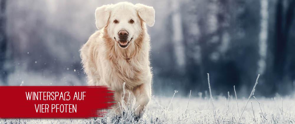 Winterfeste Hundepfoten