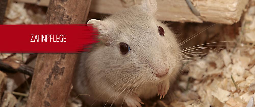 Hamster auf Streu
