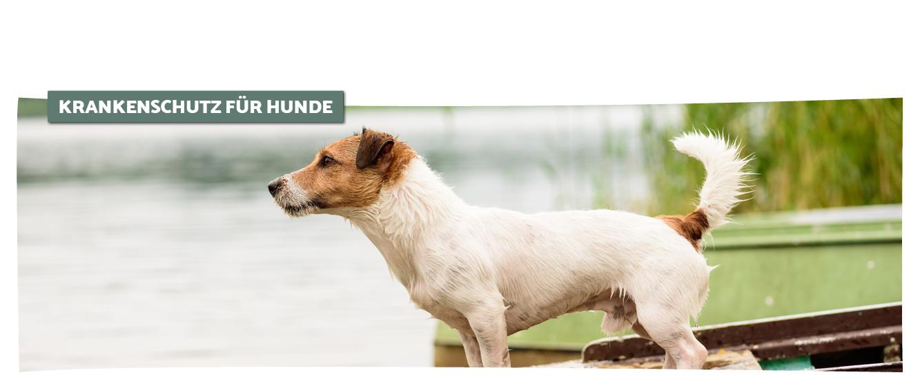 Haftpflicht für Hunde