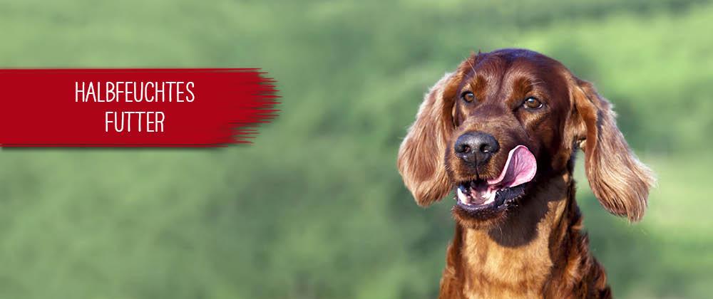 Halbfeuchtes Hundefutter