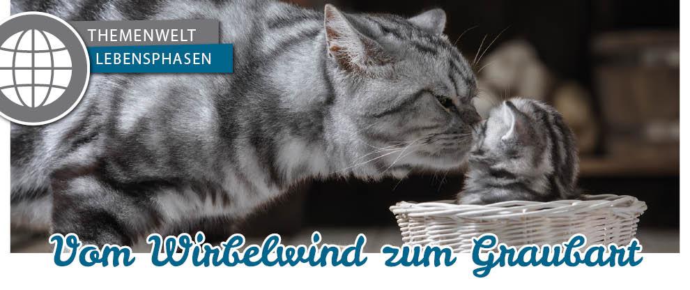 Entwicklungsphasen der Katze - von der Kitte zur Seniorkatze