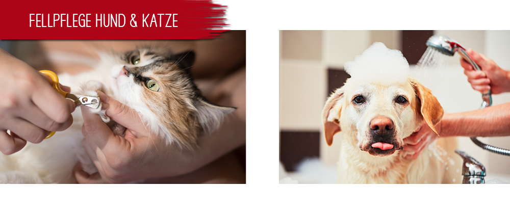 Fellpflege Hund & Katze