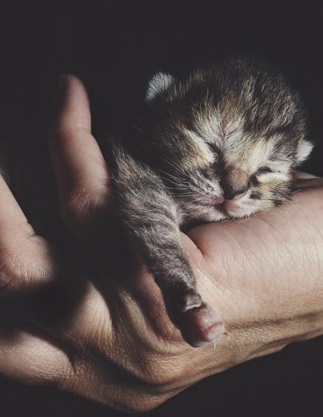 Lebensphasen im zookauf-Themenkatalog Katze