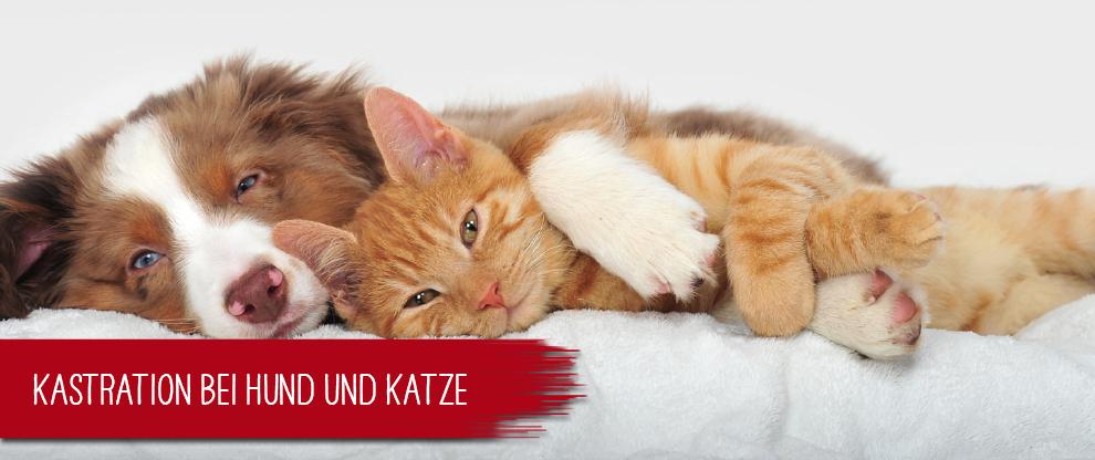 Kastration bei Hund und Katze