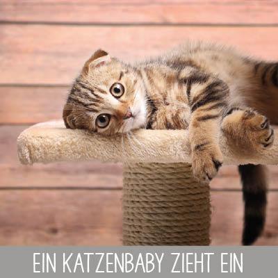 Checkliste zur Anschaffung einer Katze