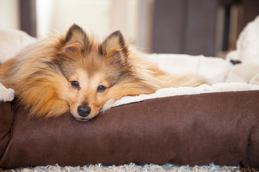 Zubehör im zookauf-Themenkatalog Hund