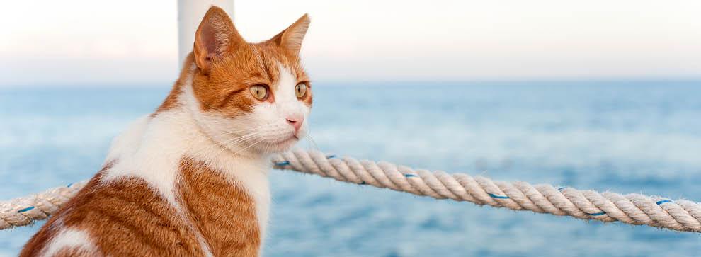 Outdoor - mit der Katze auf Reisen