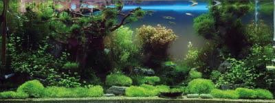 Technik im Aquarium