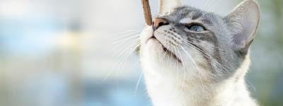 Belohnungen Katze