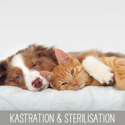 Kastration & Sterilisation