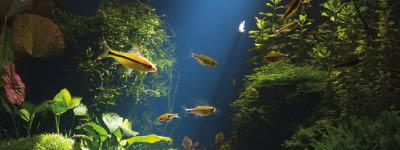 Ein Aquarium einrichten