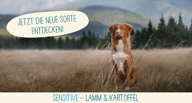 Dogs Health Sensitive mit Lamm und Kartoffel