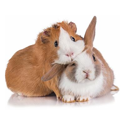 Hamster und Kaninchen