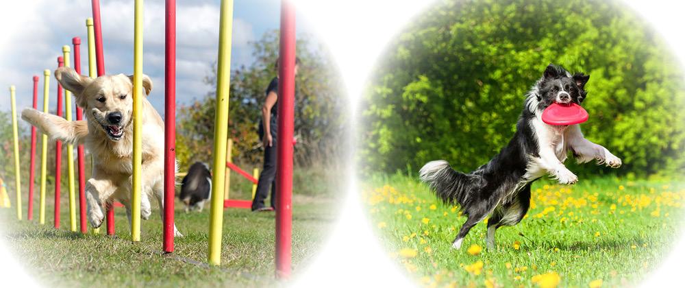 Agility Hund