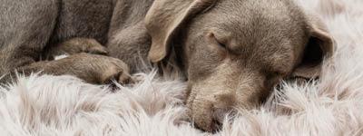 Krankenschutz für Hunde