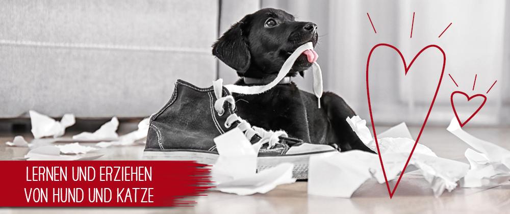 Hundeerziehung - so geht's richtig