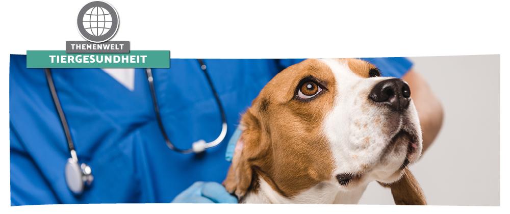 Tiergesundheit – So bleibt Ihr Hund gesund und fit