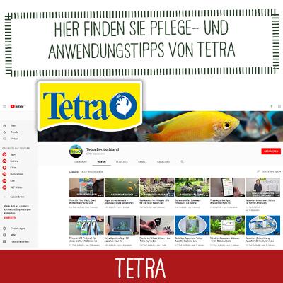 Pflegetipps von Tetra