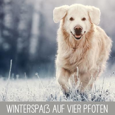 Pfoten im Winter