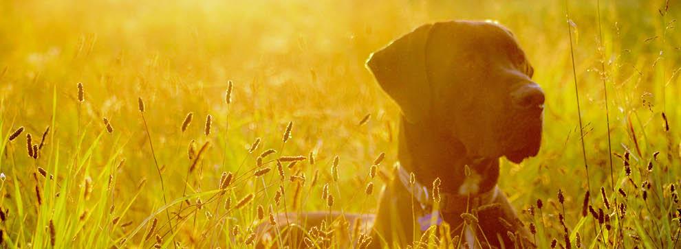 Hundefutter und -zubehör speziell für große Rassen