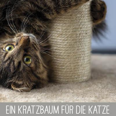 Ein Kratzbaum für die Katze