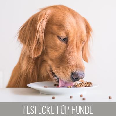 Testecke mit Proben für Hunde